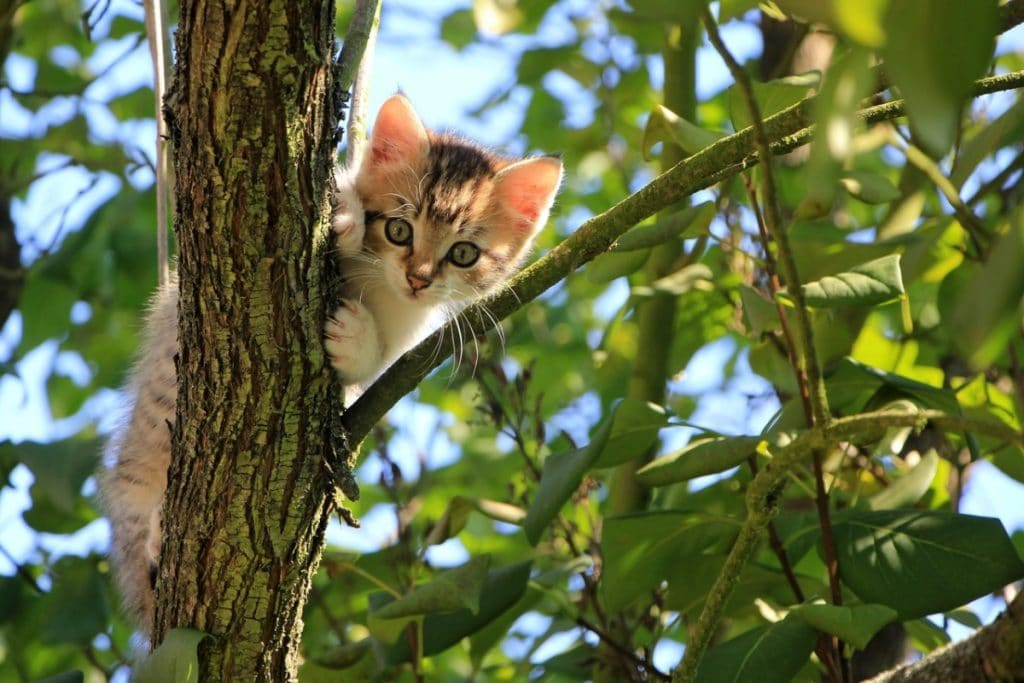 Comportamiento de los Gatos Árbol
