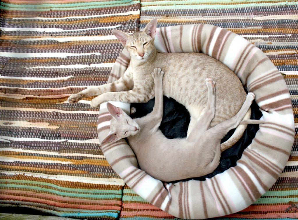 Comportamiento de los Gatos Dormir