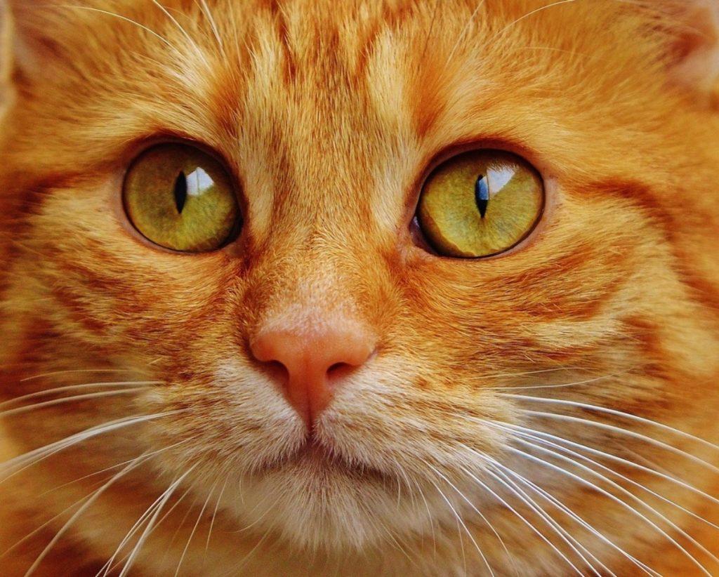 Comportamiento de los Gatos Ojos