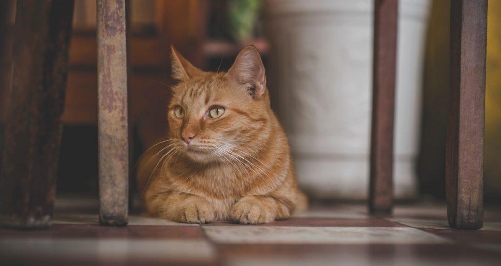 Comportamiento de los Gatos Suelo