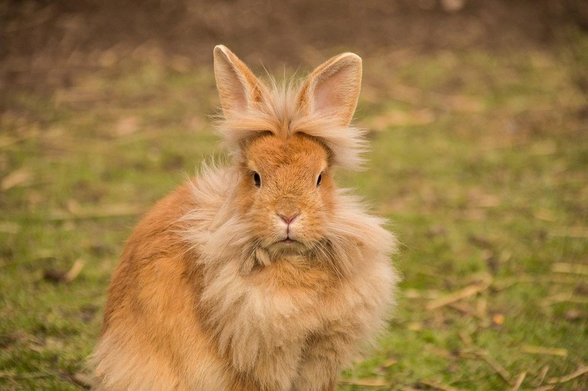 Los rasgos de estos animales varían mucho según la raza