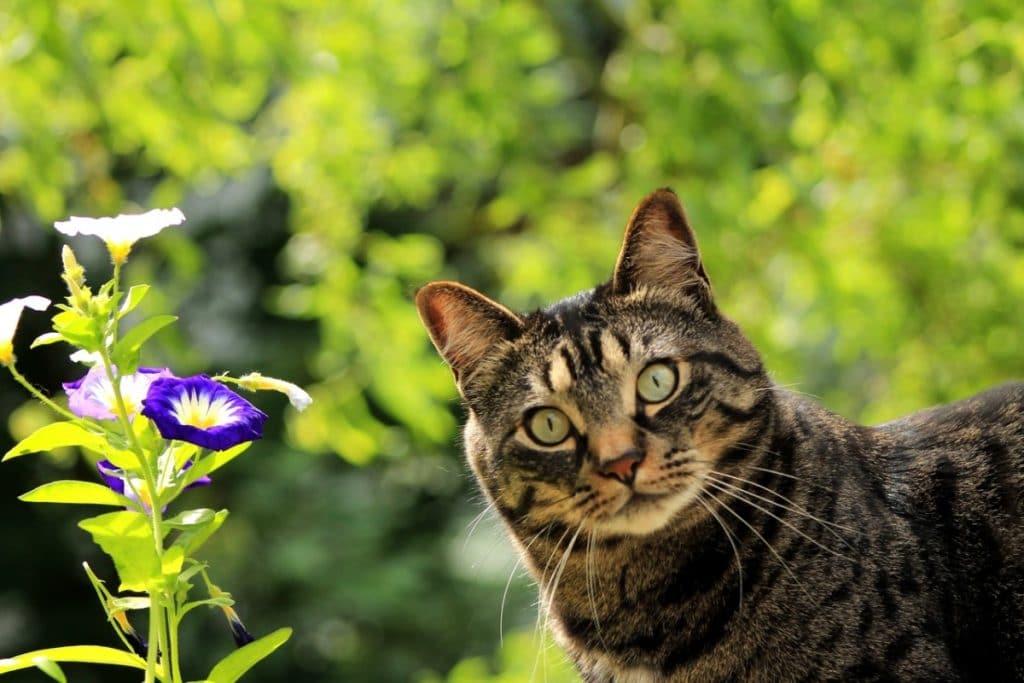 Un gato sorprendido y con curiosidad