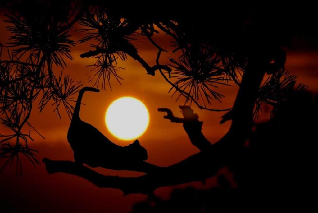 Un gatete se estira preparándose para cazar por la noche