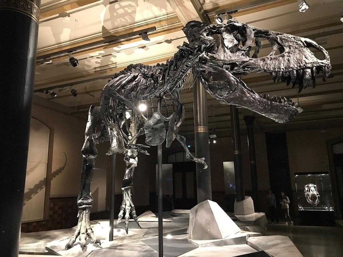 Existen numerosos museos de dinosaurios que se pueden visitar en España