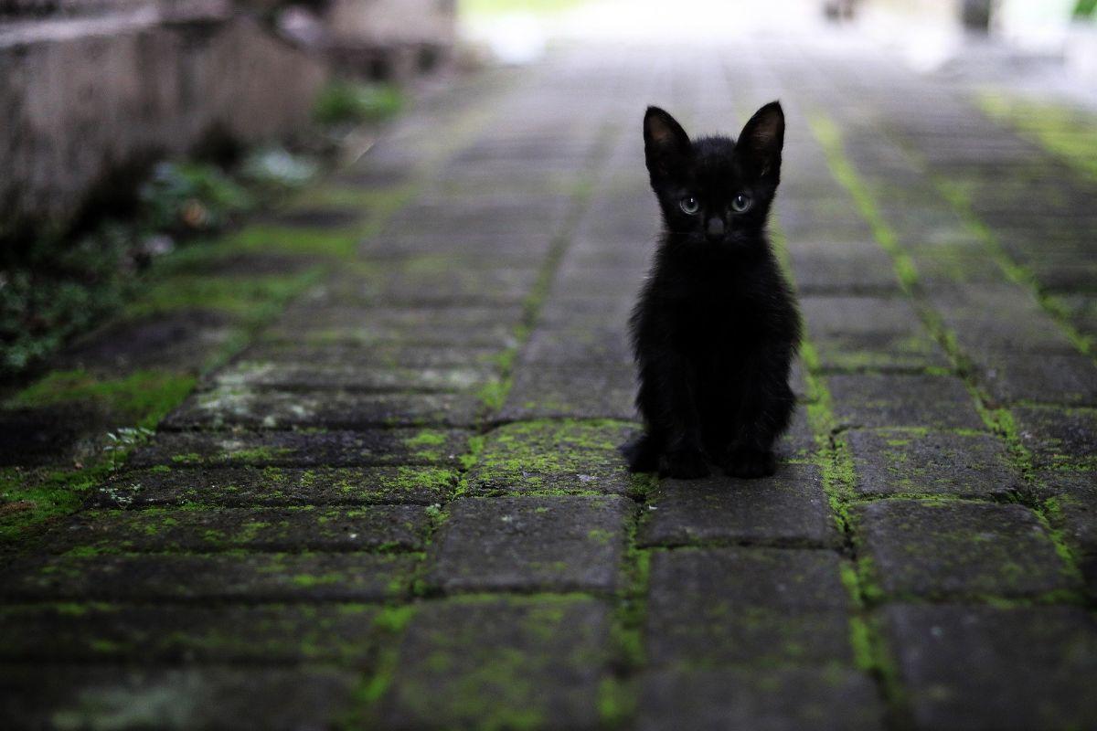 Los gatos recién nacidos: cómo son