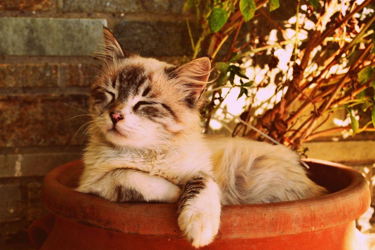 ¿Un alérgico a los gatos no puede tenerlos como mascotas?