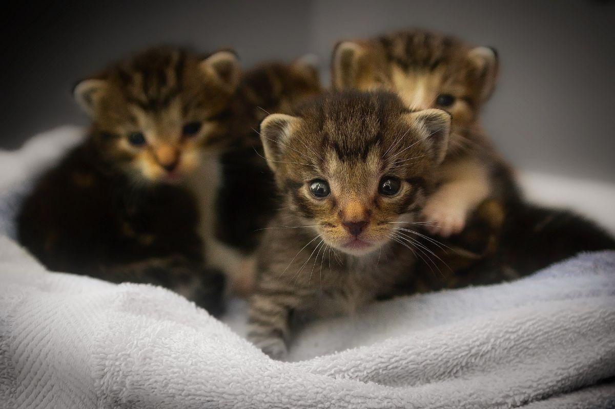 Cuidados de los gatos recién nacidos