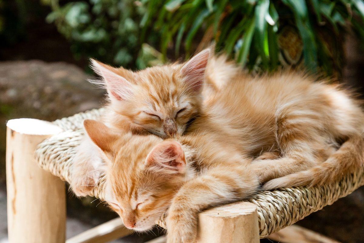 Qué cuidados requieren los gatos recién nacidos