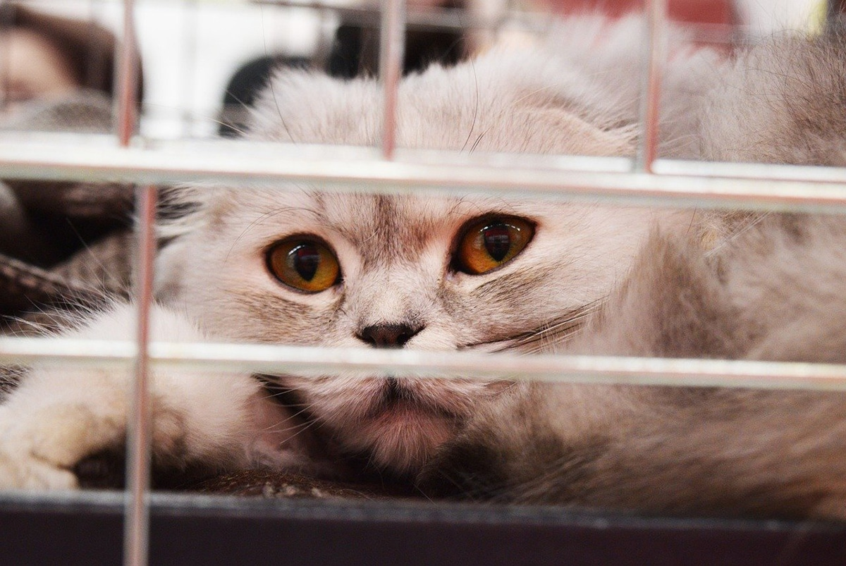 El causante de la leucemia en gatos es un retrovirus