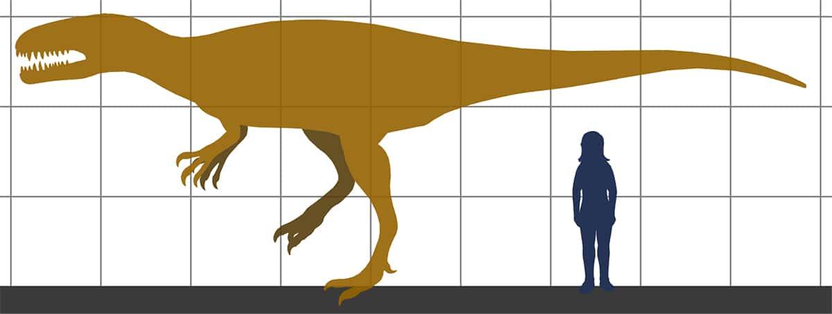 """El nombre de Megalosaurus significa """"lagarto grande"""""""