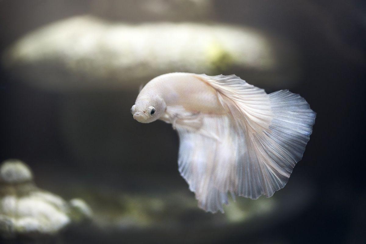El origen de los peces