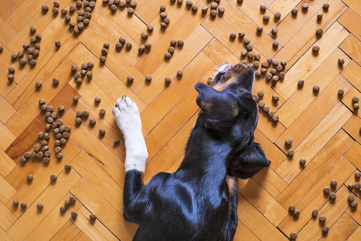 La calidad del pienso es muy importante para la salud de nuestra mascota