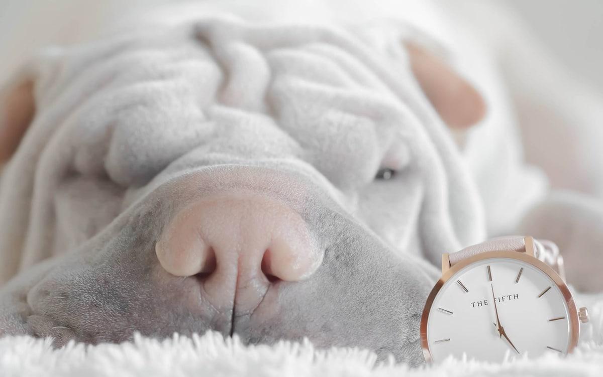 La rapidez del diagnóstico es vital para nuestra mascota