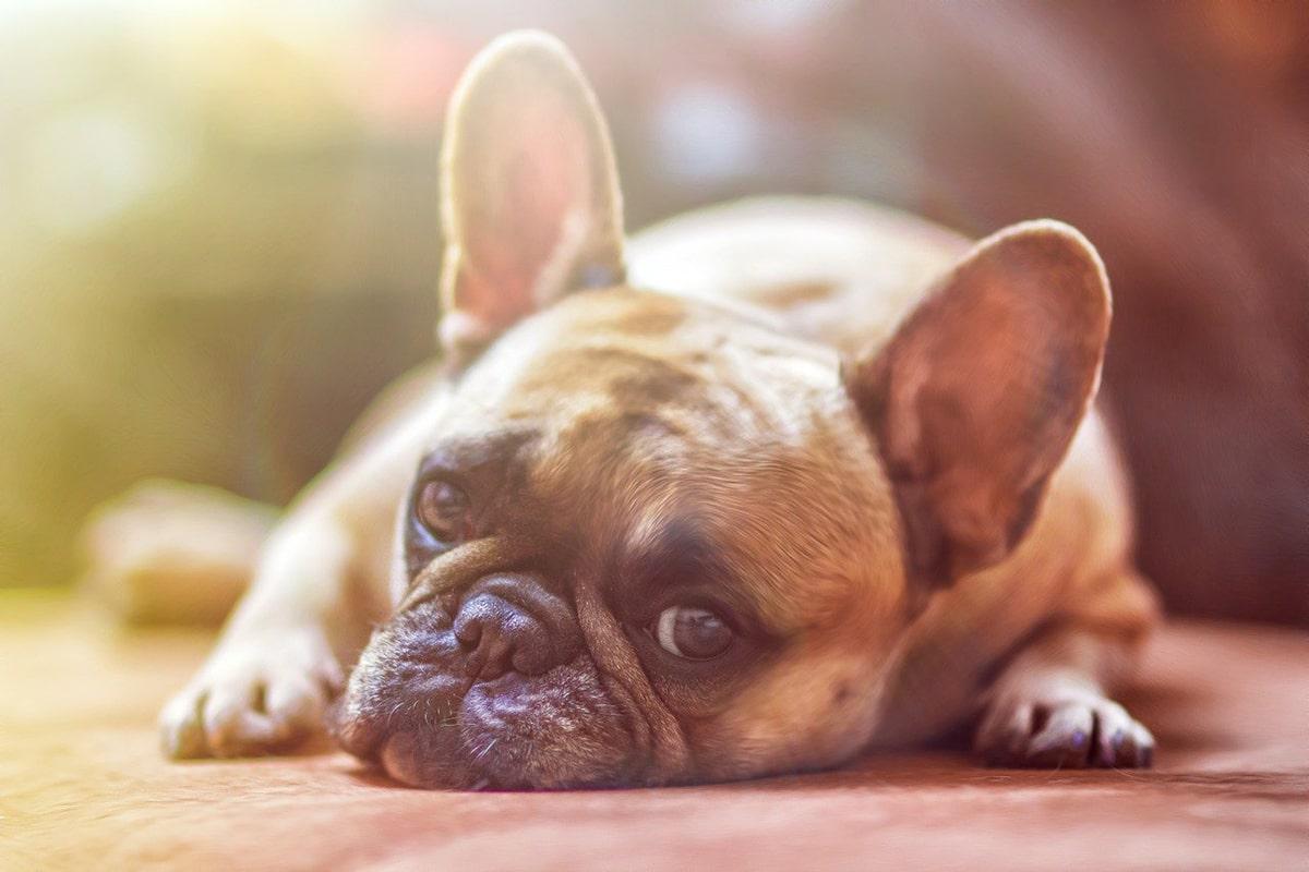 La mayoría de las consultas veterinarias se realizan por problemas gastrointestinales de nuestras mascotas