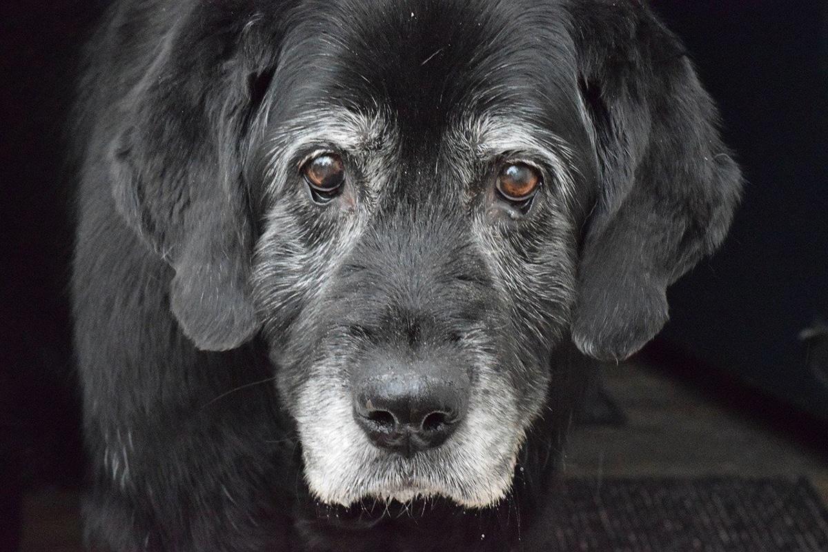 La diarrea en perros mayores puede indicar algo grave