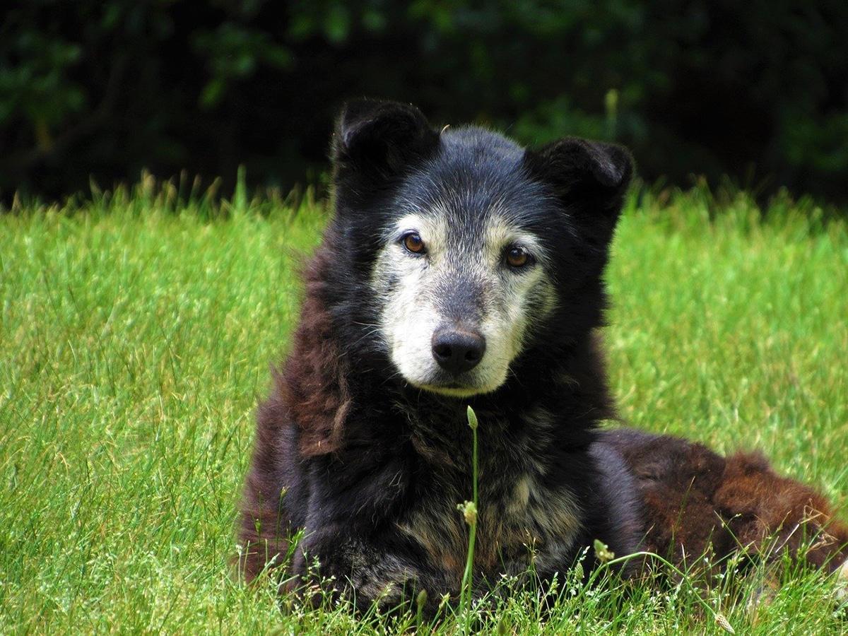 No todos los bultos en perros mayores son cáncer