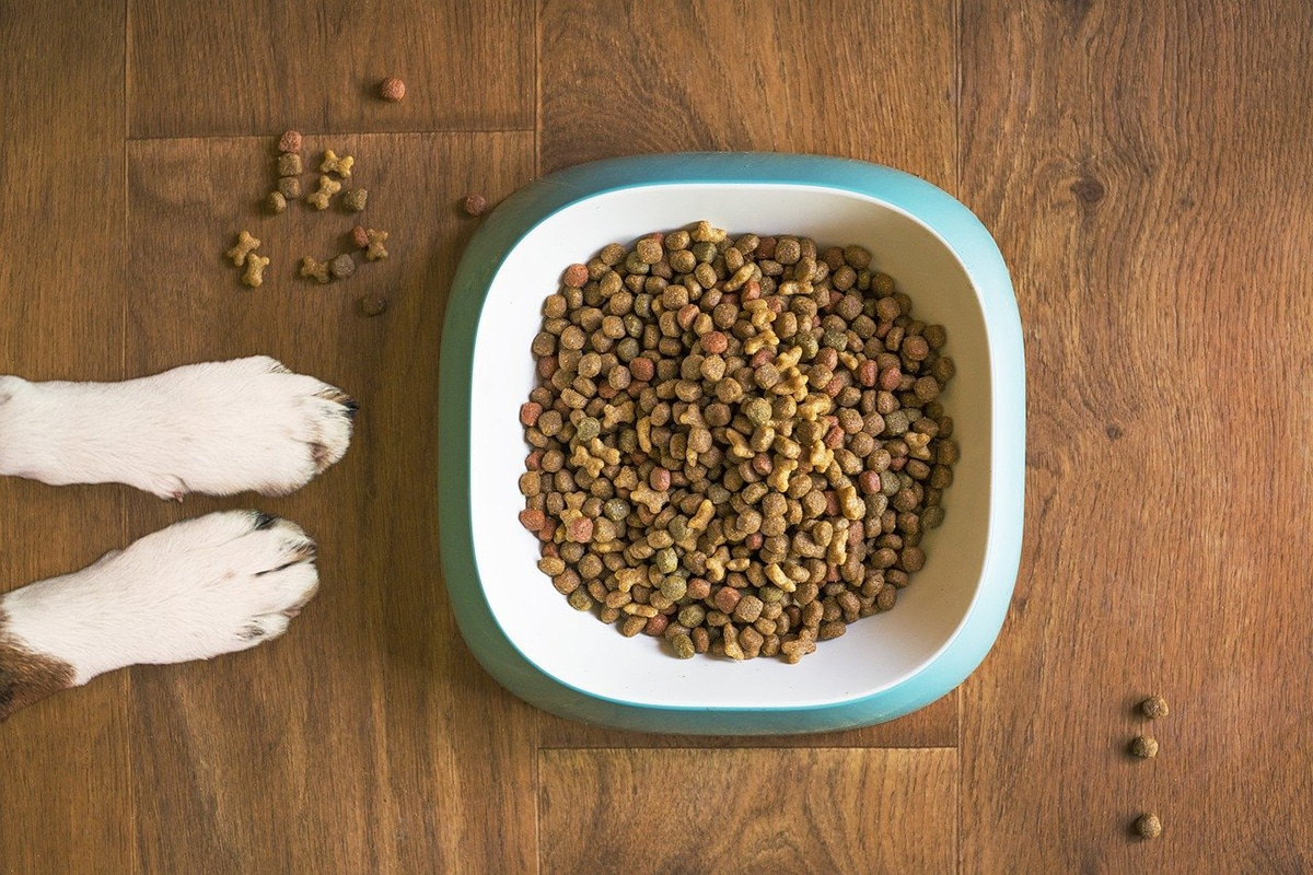 Para saber cuál es el mejor pienso para perros, debemos interpretar la etiqueta de alimentación