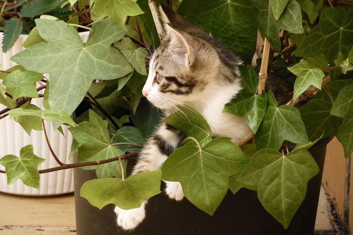 plantas toxicas para gatos enfermedades