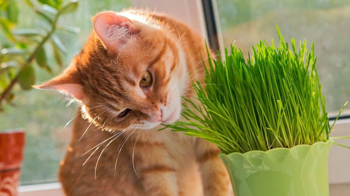 plantas toxicas para gatos