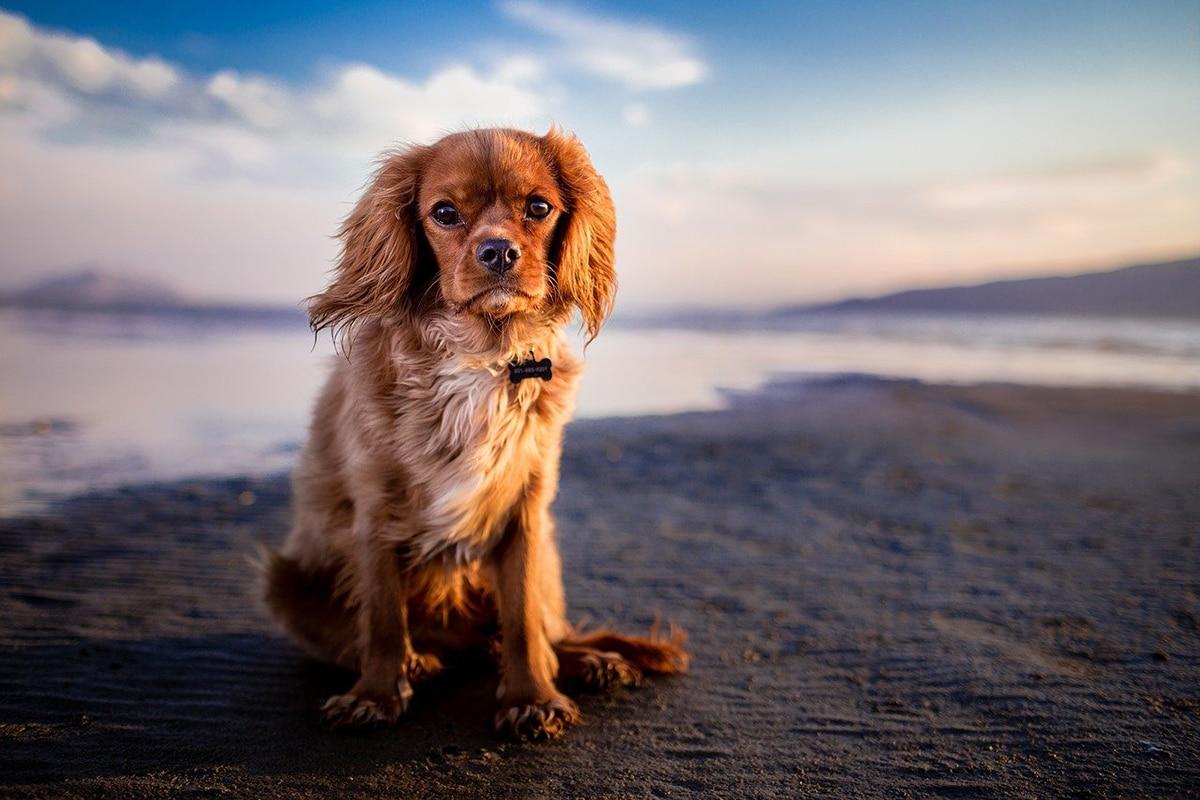 Existan varias playas en España donde ir de vacaciones con perros