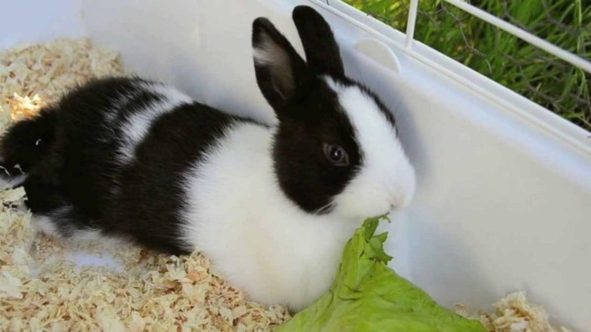 que comen los conejos cuidados