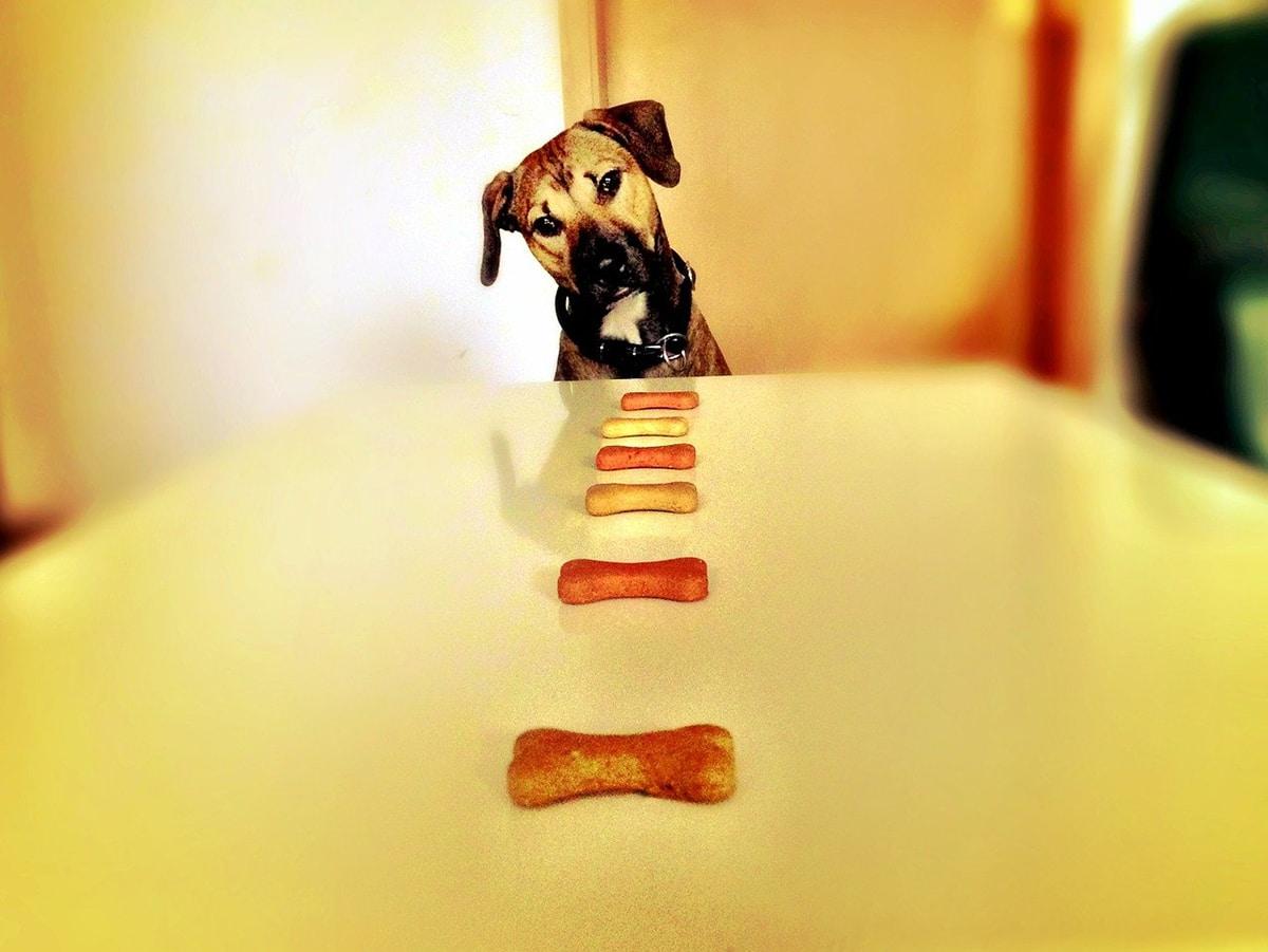 Se pueden hacer snacks caseros para perros con verdura deshidratada