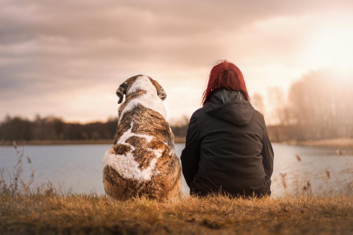 Hay muchos aspectos que se deben tener en cuenta antes de viajar con mascotas