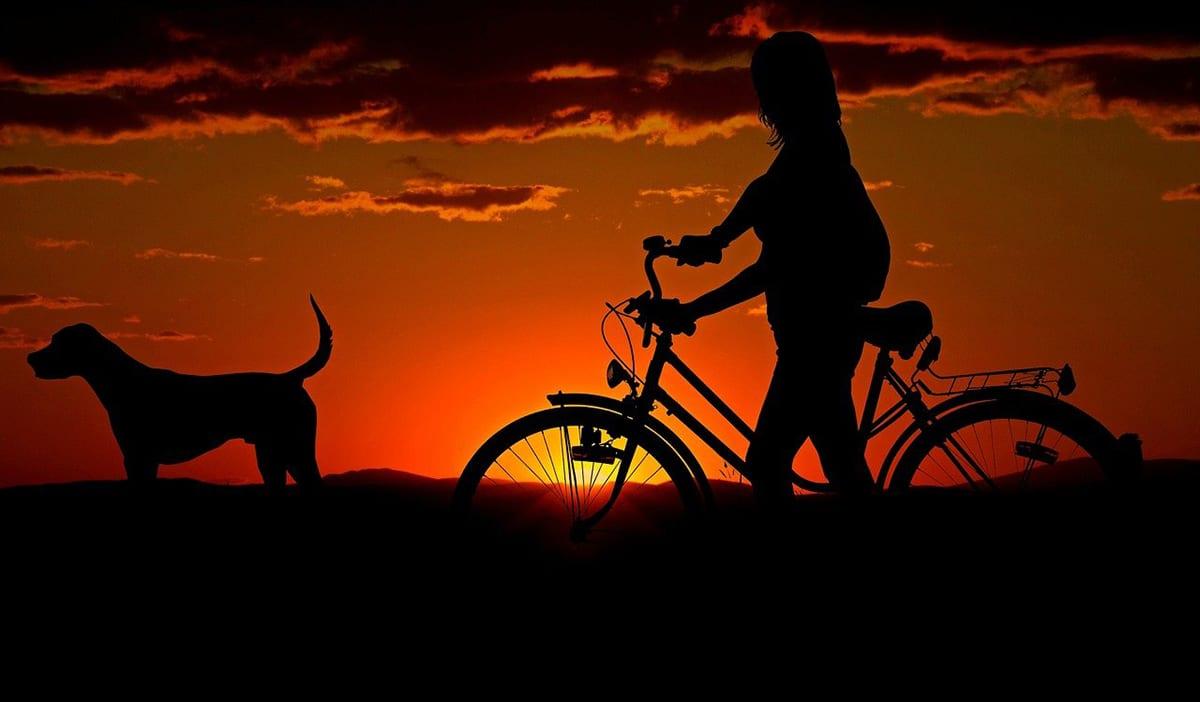 Existen muchos medios de transporte que aceptan mascotas
