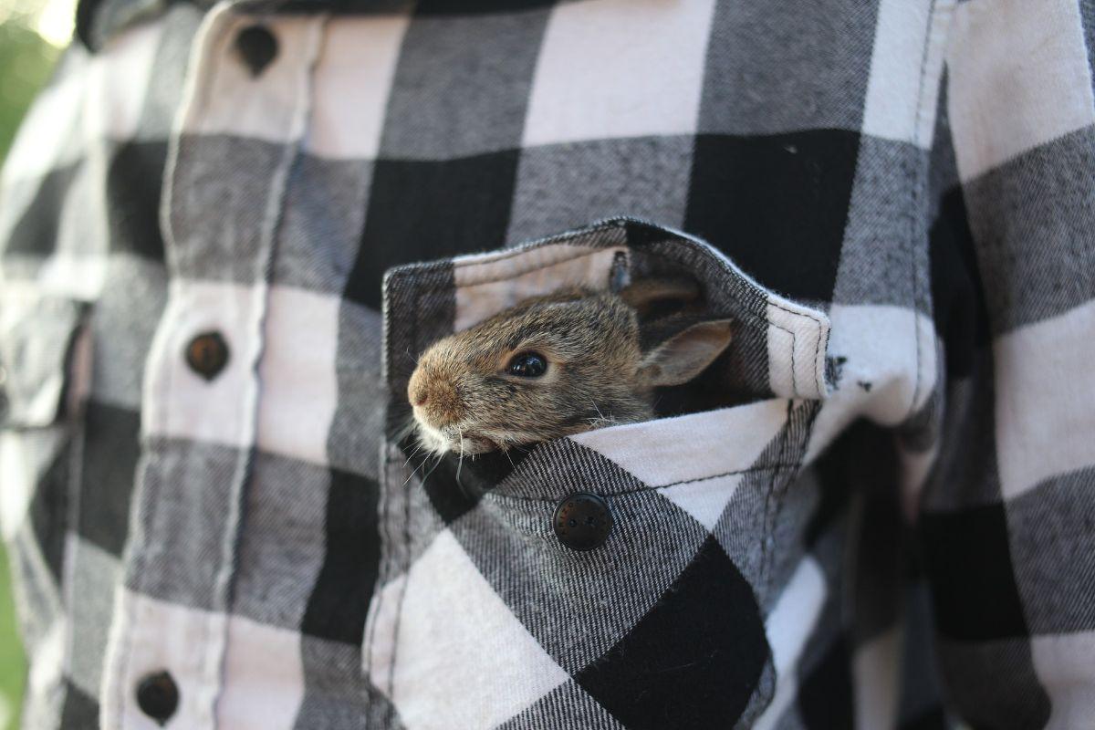 Las enfermedades de los conejos: ¿cuáles hay?