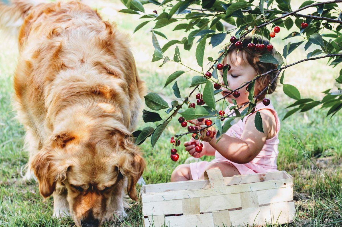 Frutas que no pueden comer los perros: cuáles son