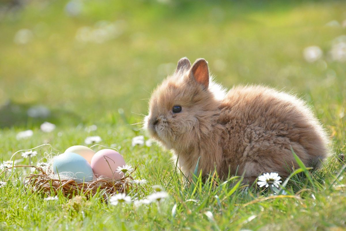 Cuidados de los conejos bebés