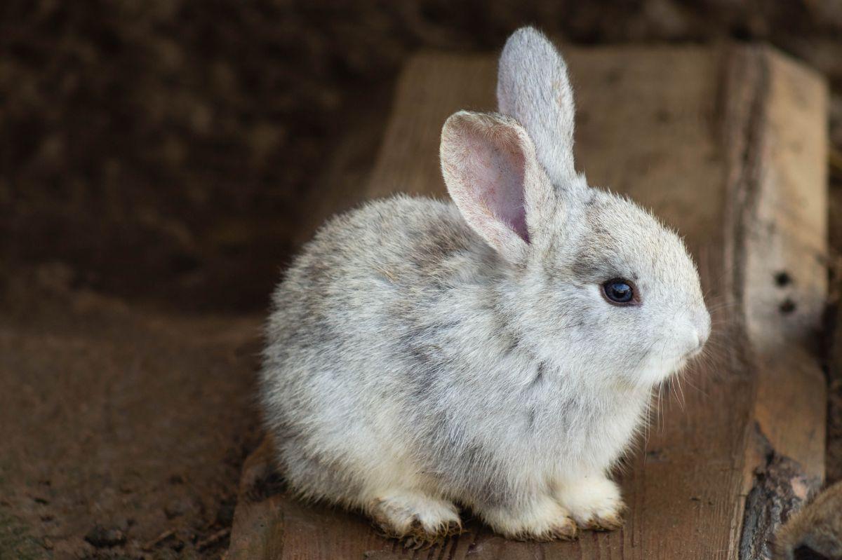 La alimentación de los conejos bebés