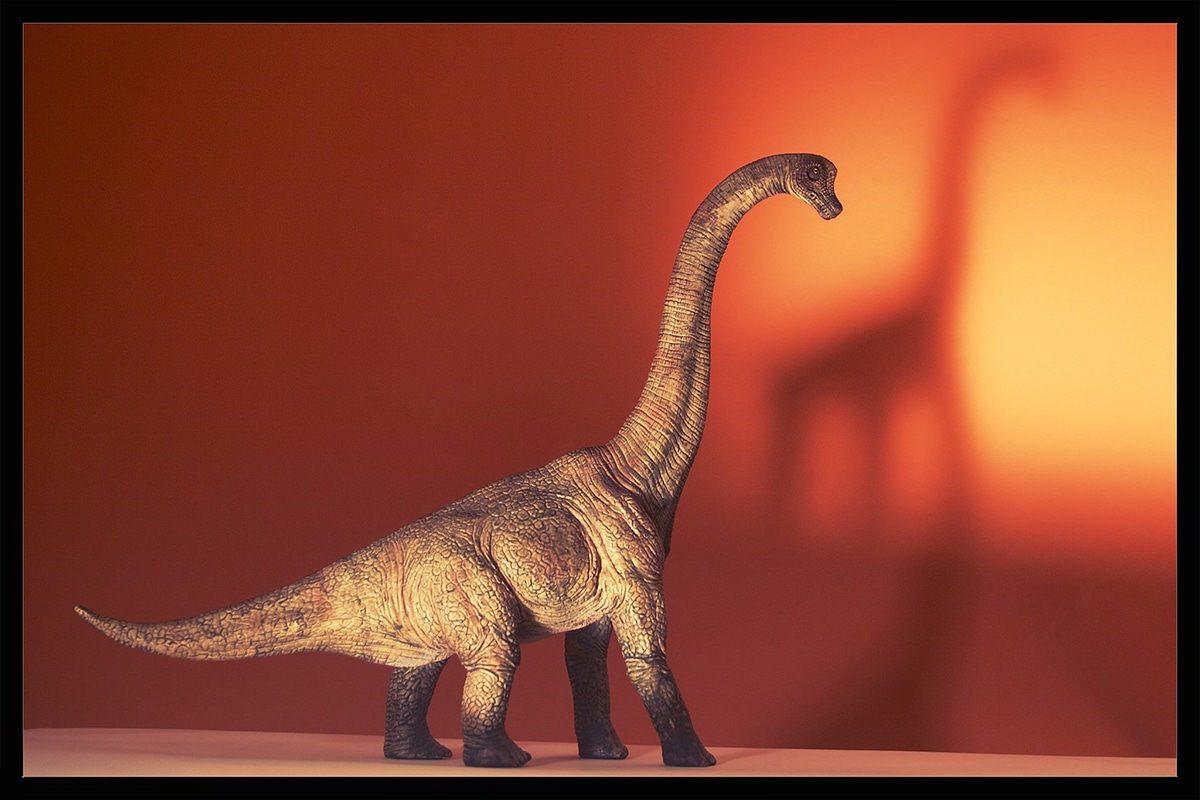 El Braquiosaurio es el cuellilargo más famoso a día de hoy