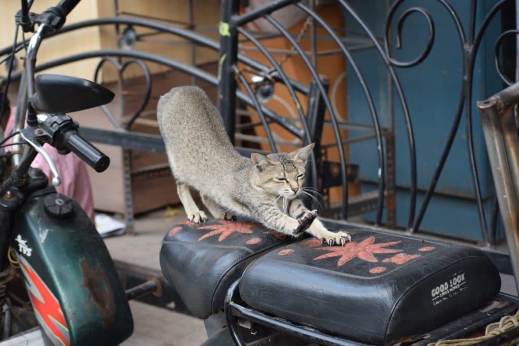 Gato estirándose encima de una moto