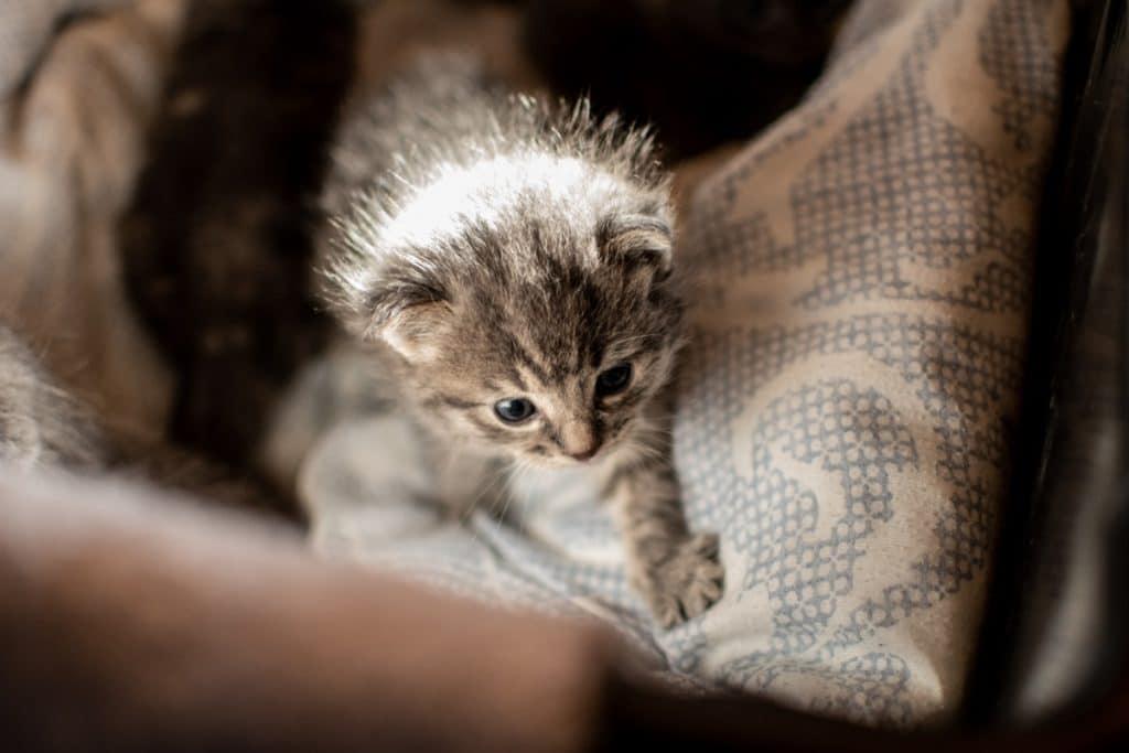 Gatito amasando