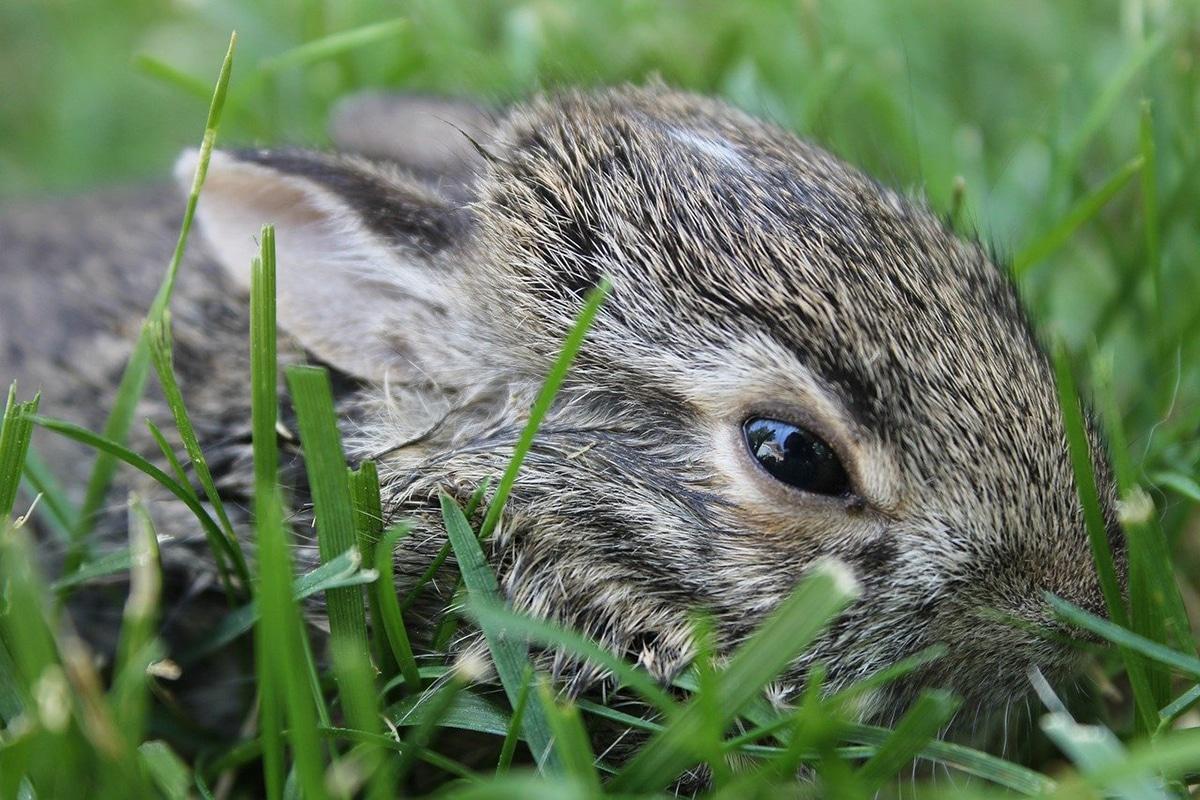 Existen muchas verduras que pueden comer los conejos