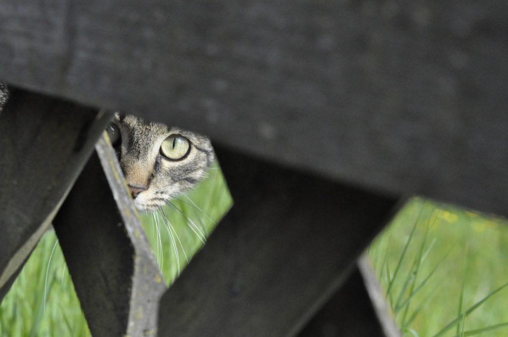 Gato cazando tras una valla