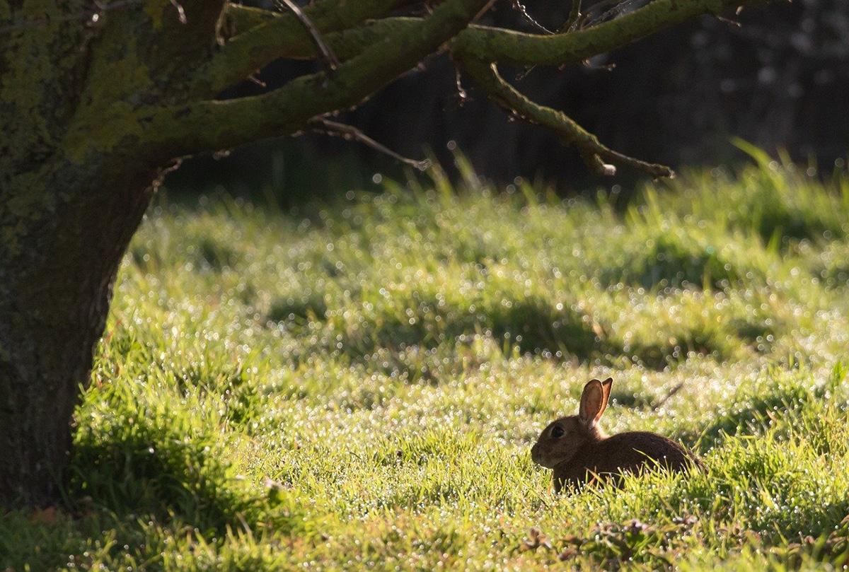 Los conejos de campo no son liebres