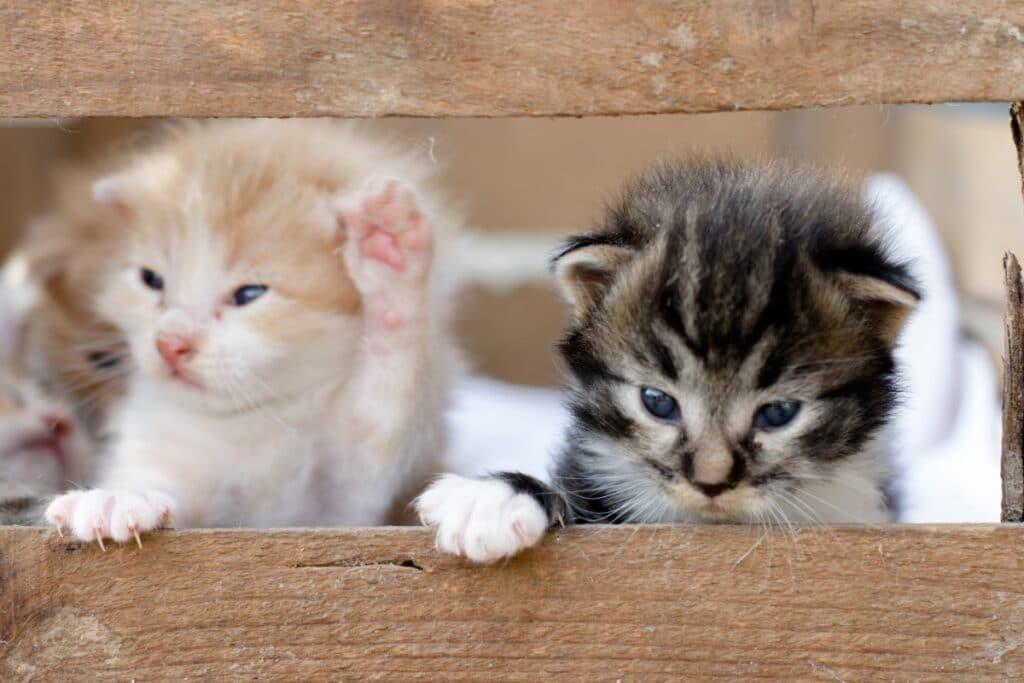 Gatitos en una caja