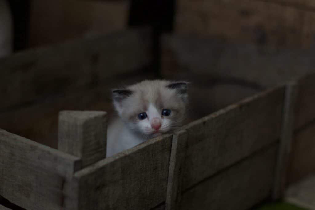 Un gatito recién nacido en una caja