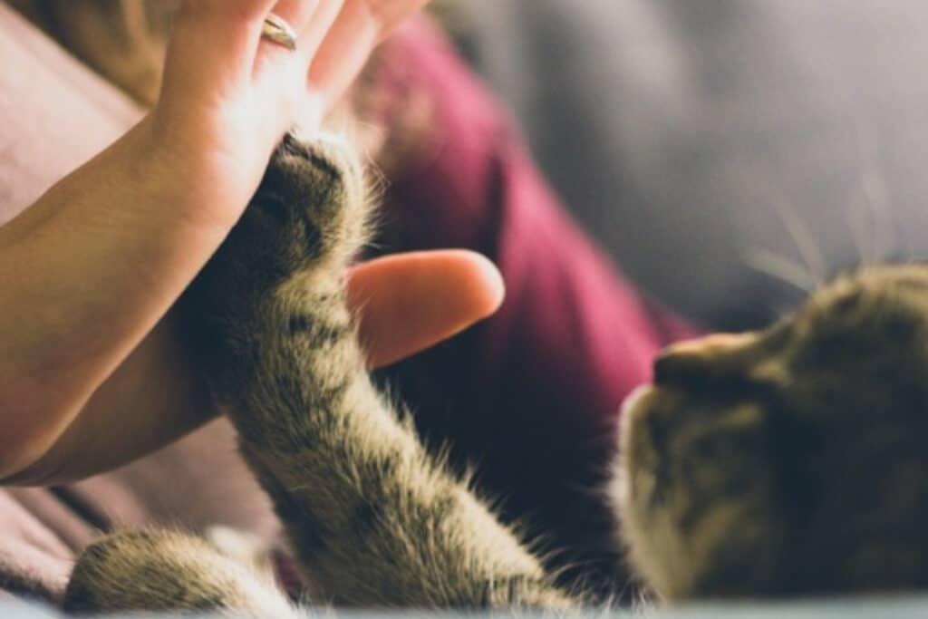 Gato apoyando la patita en una palma