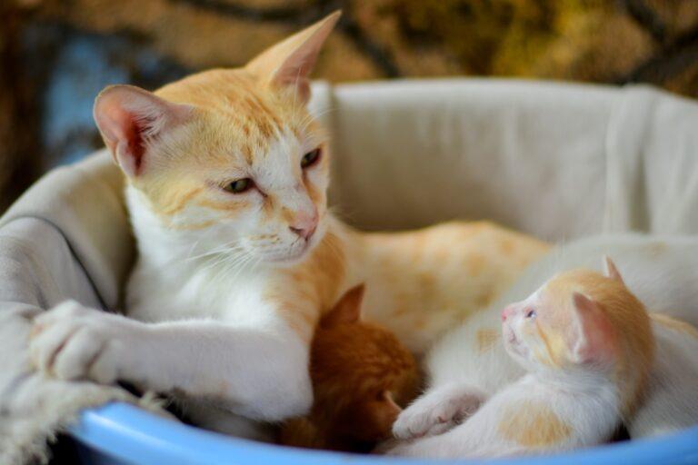 Una madre con sus gatitos