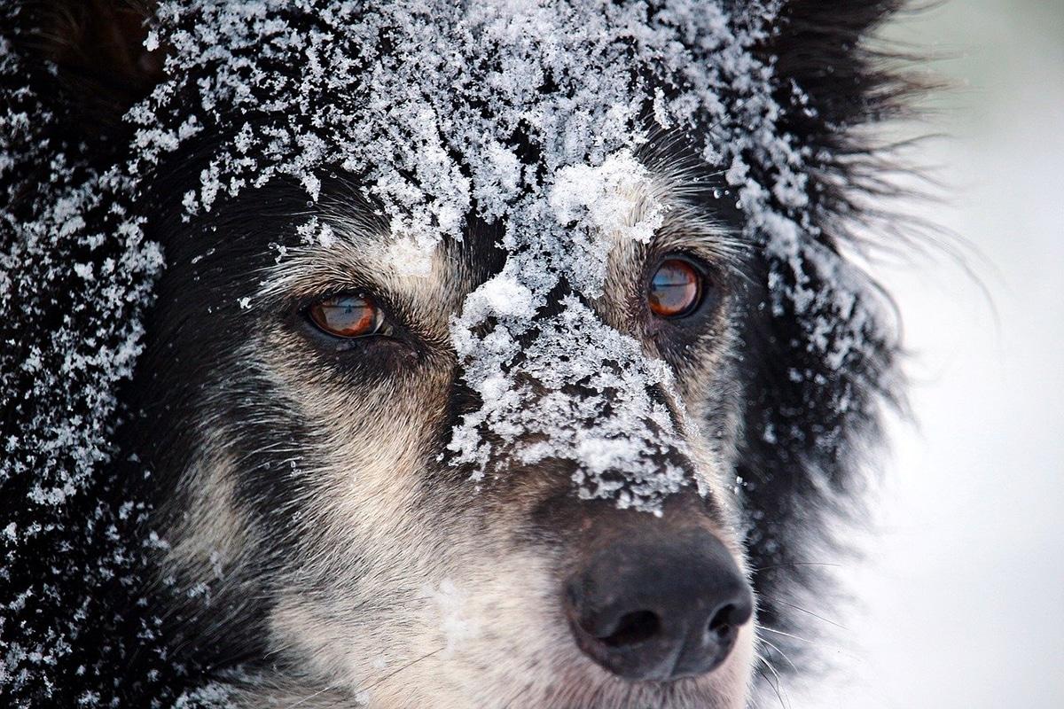La hipotermia pueden provocar temblores en los animales