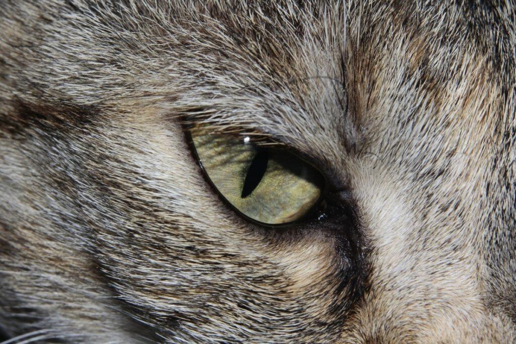 Los ojos cerrados son un síntoma de conjuntivitis