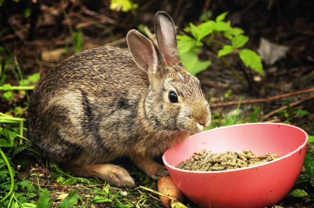 Las hierbas y el heno son esenciales en la dieta de los conejos