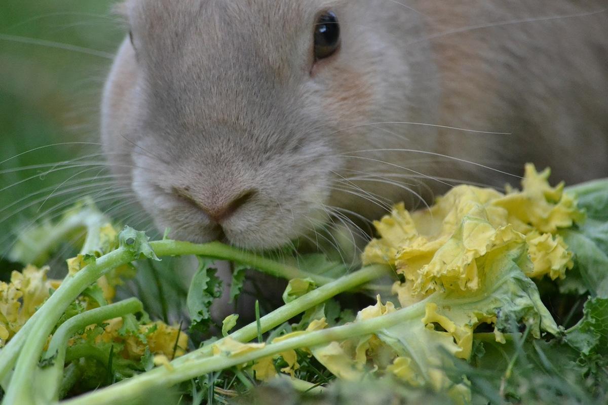 Saber qué comen los conejos salvajes puede ser muy útil si los queremos cuidar en nuestro jardín