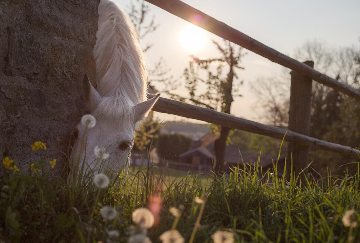 Algunos alimentos pueden ser nocivos para los caballos