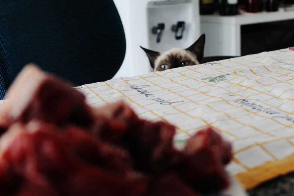 Gato acechando comida humana