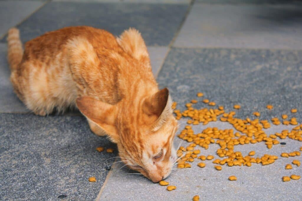 Comiendo pienso del suelo
