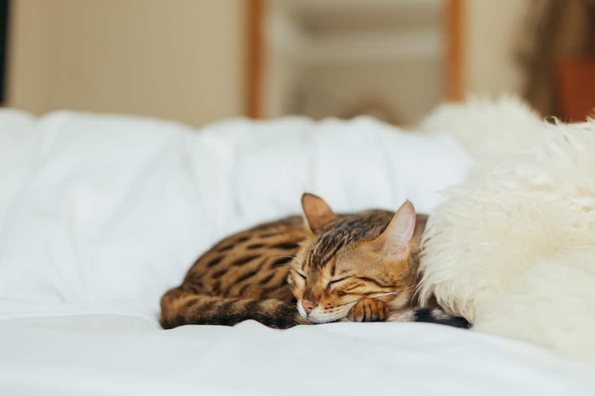 Un gato echándose una siesta